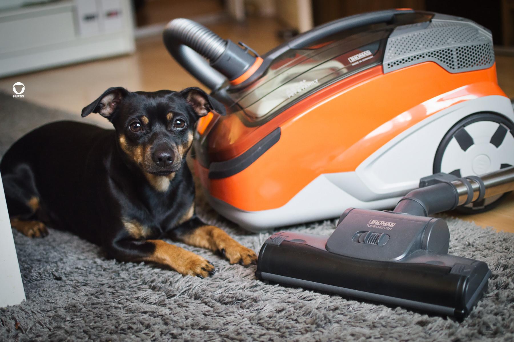 Pinscher Buddy, Buddy and Me, Hundeblog, Dogblog, Produkte, Staubsauger, Thomas Aqua Pet & Family, TierhaarFleckwegmacher, Tierhaare, Hundehaushalt, Sauberkeit, Produkttest, Erfahrungen, Saug-Wisch-Funktion