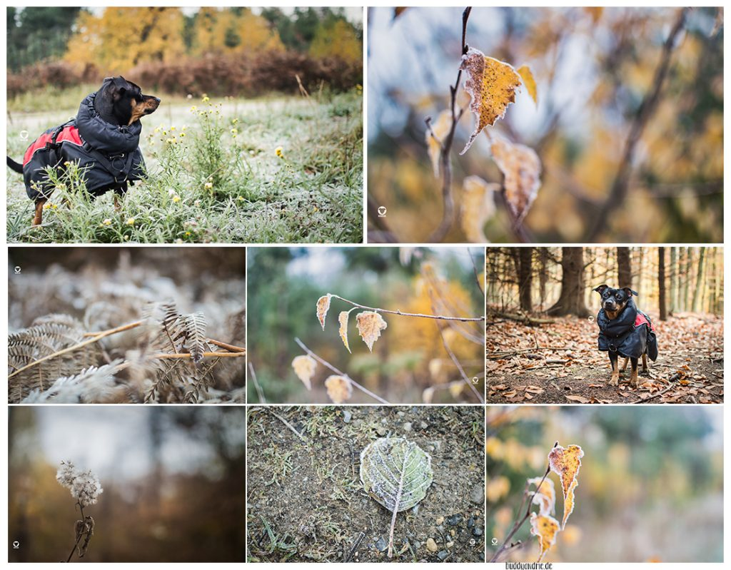 Pinscher Buddy, Buddy and Me, Hundeblog, Dogblog, Ruhrgebiet, Herbst, Wald, Spaziergang, Hund, Gassi, Ratingen, Hundemantel, Frost, Winter