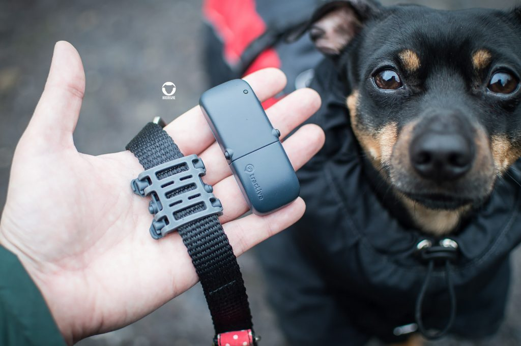 Pinscher Buddy, Buddy and Me, Hundeblog, Dogblog, Ruhrgebiet, Leben mit Hund, Hundealltag, GPS Tracker, Tractive, Erfahrungen, Test, Aktivitätstracking für Hunde