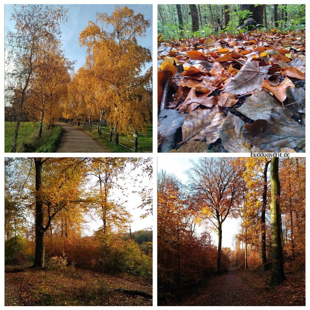 Pinscher Buddy, Buddy and Me, Hundeblog, Dogblog, Ruhrgebiet, Herbst, Wald, Spaziergang, Hund, Gassi, Schnappschüsse, November