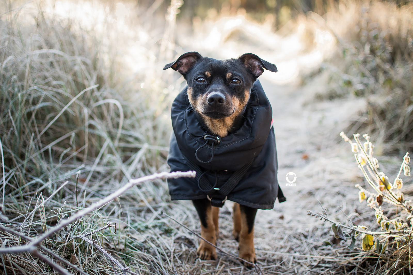 Pinscher Buddy, Buddy and Me, Hundeblog, Dogblog, Ruhrgebiet, Leben mit Hund, Hundealltag, Frost, Winter