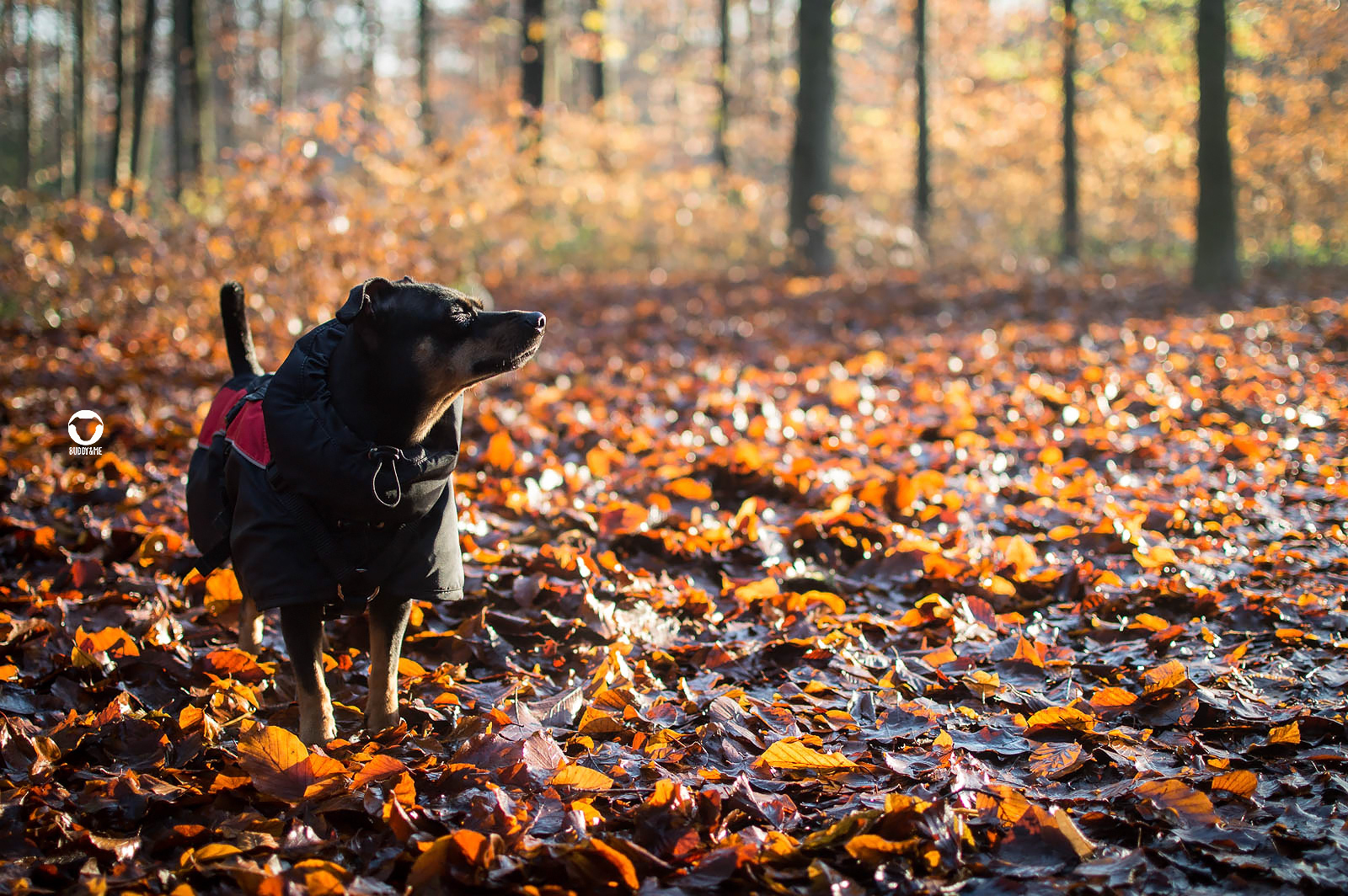 Pinscher Buddy, Buddy and Me, Hundeblog, Dogblog, Ruhrgebiet, Leben mit Hund, Hundealltag