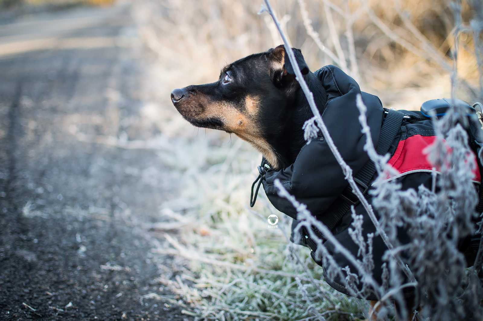 Pinscher Buddy, Buddy and Me, Hundeblog, Dogblog, Ruhrgebiet, Leben mit Hund, Hundealltag, Winter, Frost, Ratingen, Januar, Hundemantel, Sonne, Gassi