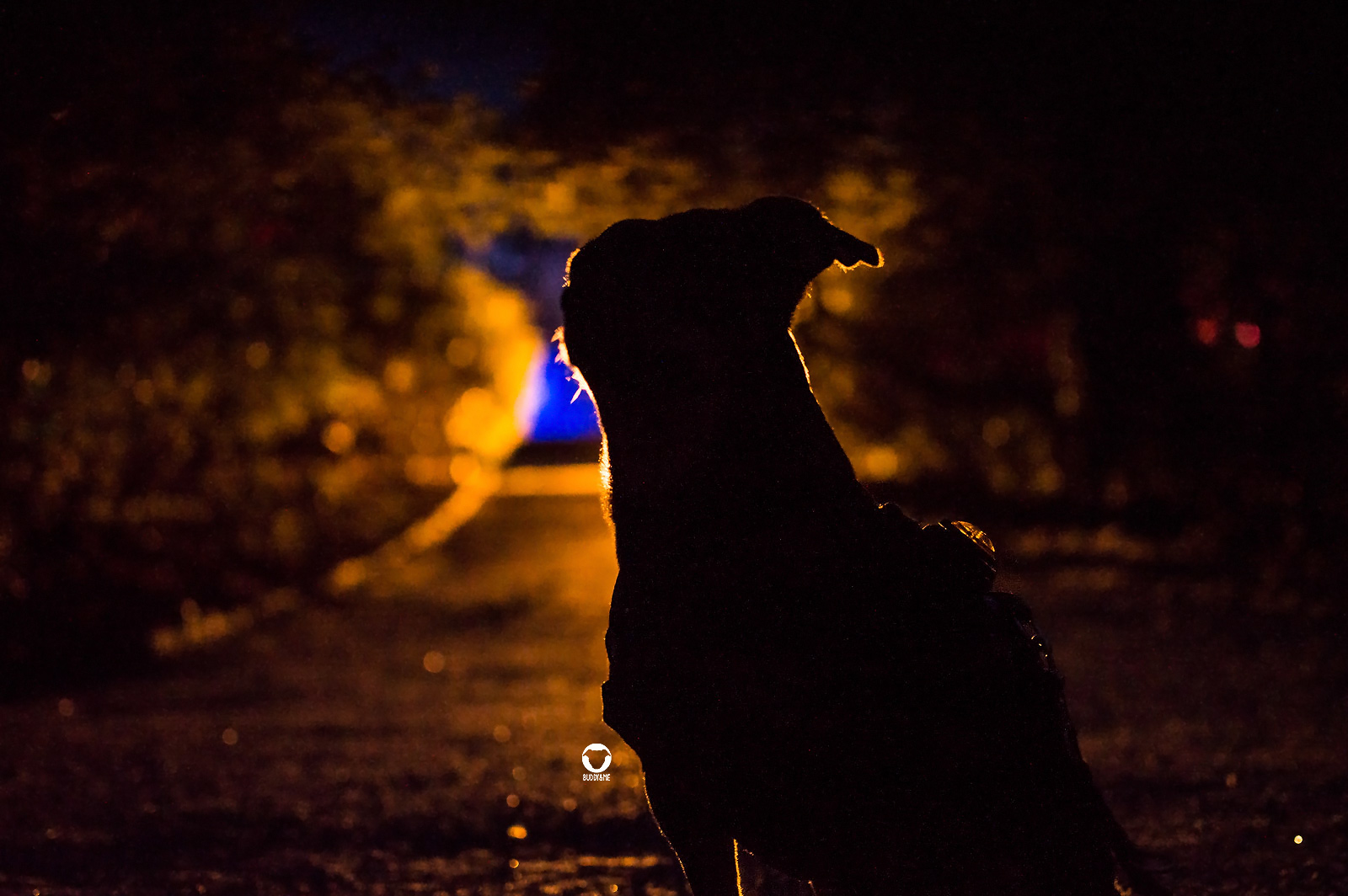 Pinscher Buddy, Buddy and Me, Hundeblog, Dogblog, Ruhrgebiet, Leben mit Hund, Hundealltag, Gruga Park, Parkleuchten 2020 mit Hund
