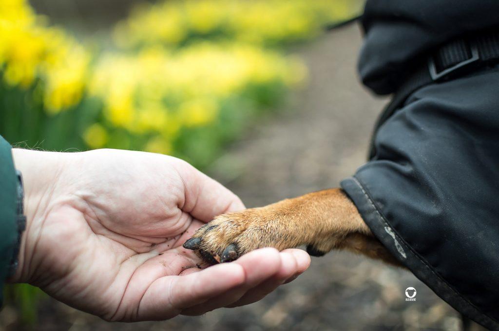 Mensch-Hund-Team, Pinscher Buddy, Buddy and Me, Hundeblog, Dogblog, Ruhrgebiet, Leben mit Hund, Hundealltag, gemeinsam, Beziehung, Bindung