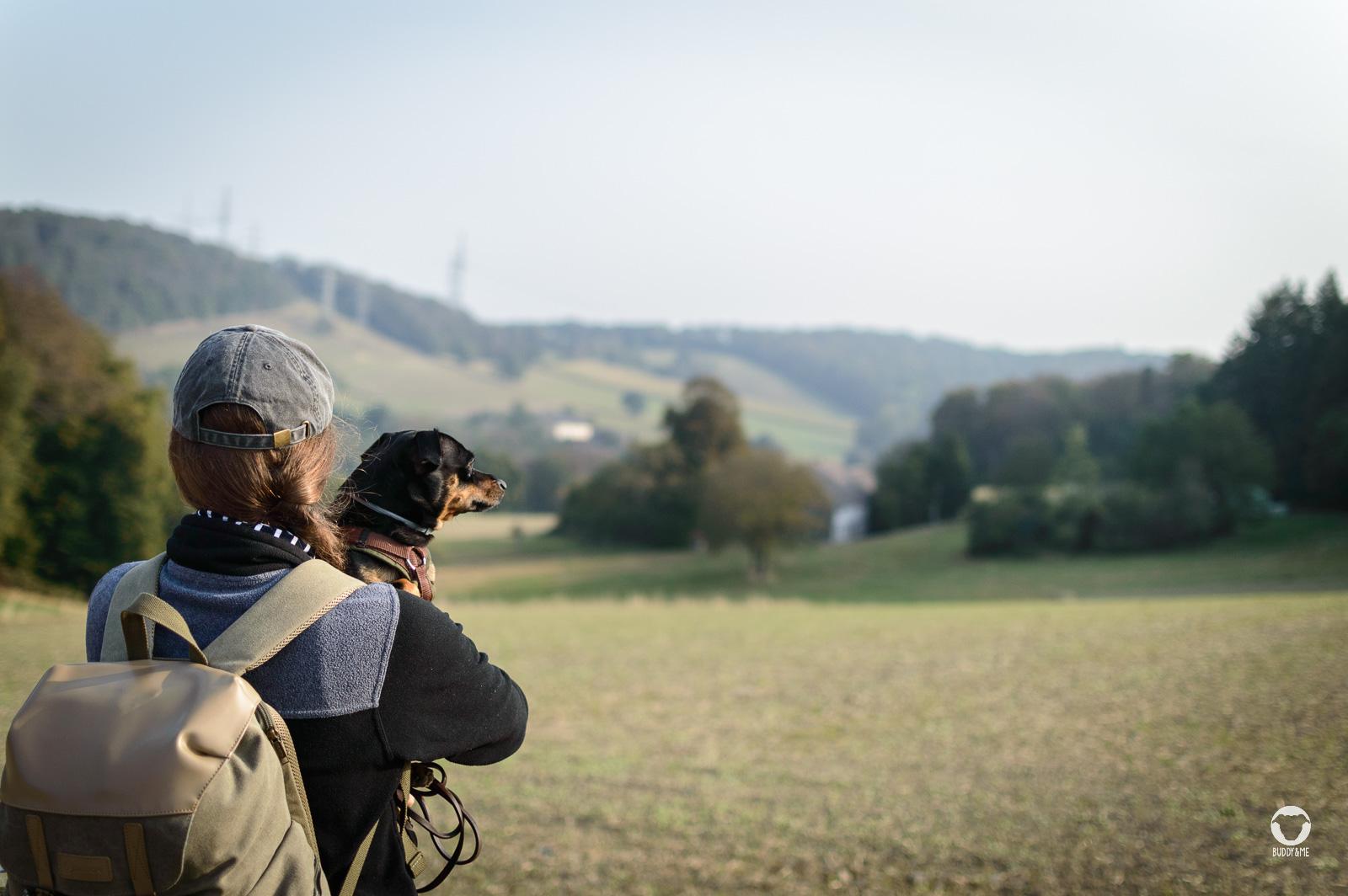 Pinscher Buddy, Buddy and Me, Hundeblog, Dogblog, Ruhrgebiet, Leben mit Hund, Hundealltag, Bewegung, Glück, Team, Gemeinsam