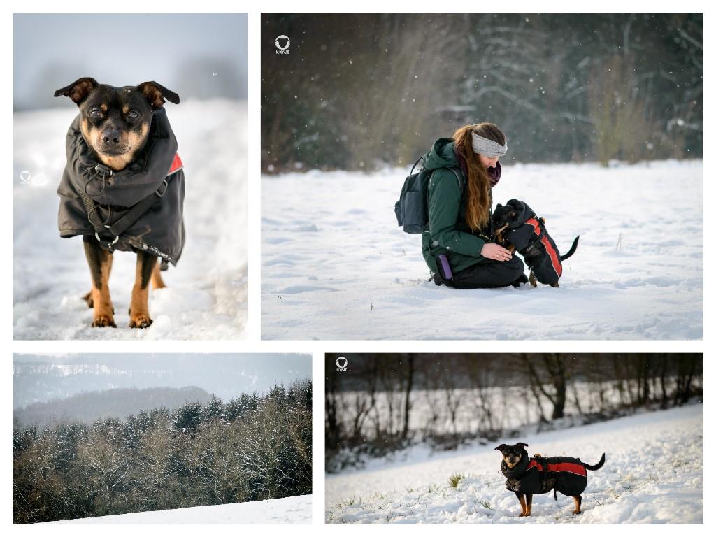 Winter 2020/21 Momente - Pinscher Buddy, Buddy and Me, Hundeblog, Dogblog, Ruhrgebiet, Leben mit Hund, Hundealltag, Schnee, Schneetag, Winter, Heissiwald, Hundemantel, Winterwonderland