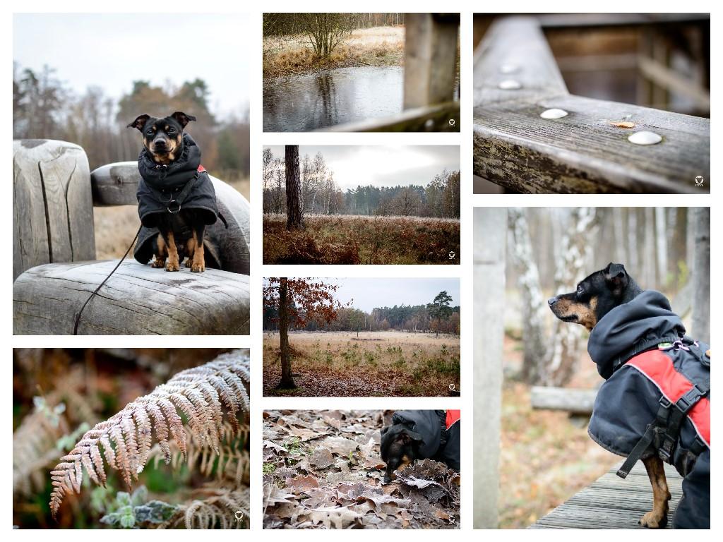 Ohligser Heide - Pinscher Buddy, Buddy and Me, Hundeblog, Dogblog, Ruhrgebiet, Leben mit Hund, Hundealltag