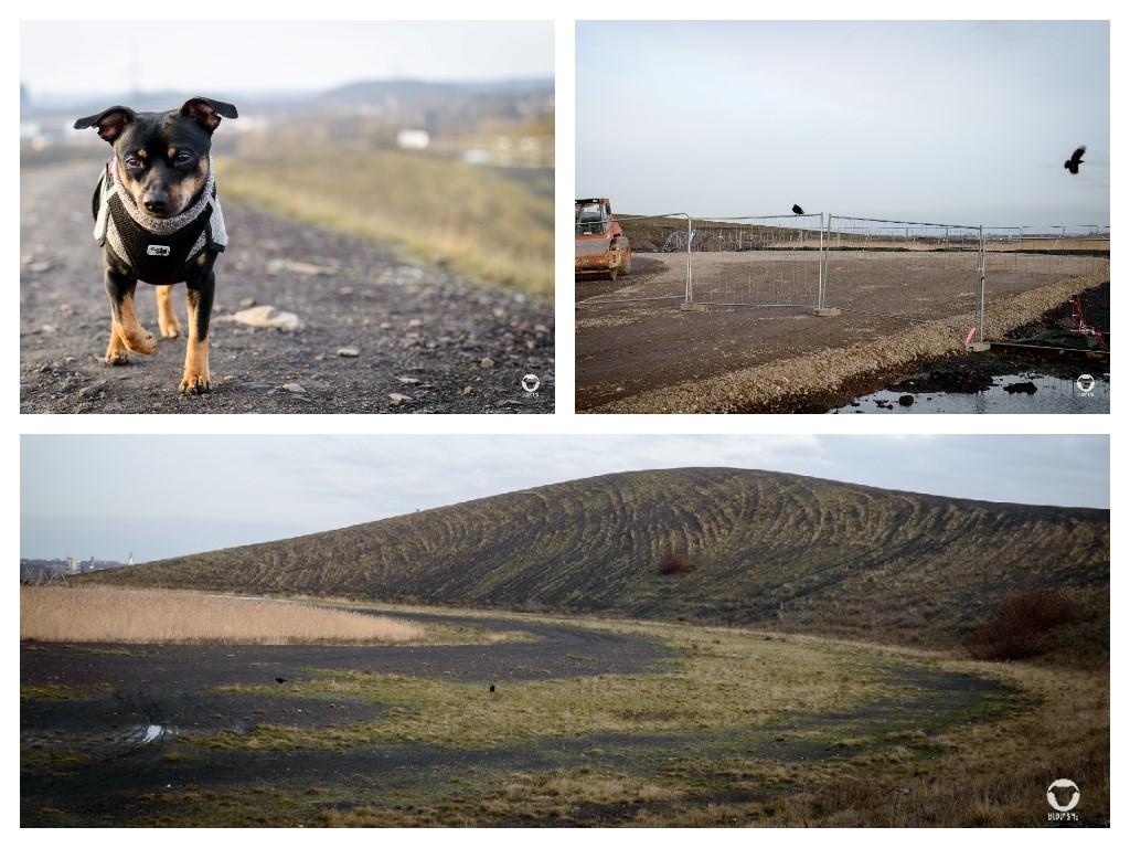Mottbruchhalde - Pinscher Buddy, Buddy and Me, Hundeblog, Dogblog, Ruhrgebiet, Leben mit Hund, Hundealltag