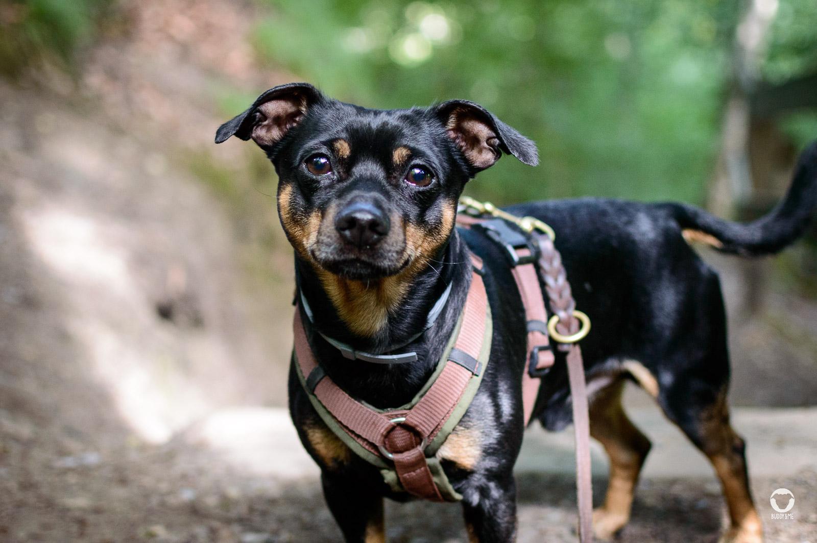 Buddy unterwegs im Neandertal | Pinscher Buddy, Buddy and Me, Hundeblog, Dogblog, Ruhrgebiet, Leben mit Hund, Hundealltag