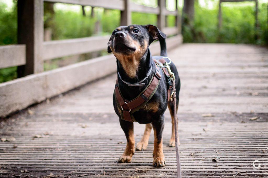 MIt Buddy im Neandertal | Pinscher Buddy, Buddy and Me, Hundeblog, Dogblog, Ruhrgebiet, Leben mit Hund, Hundealltag