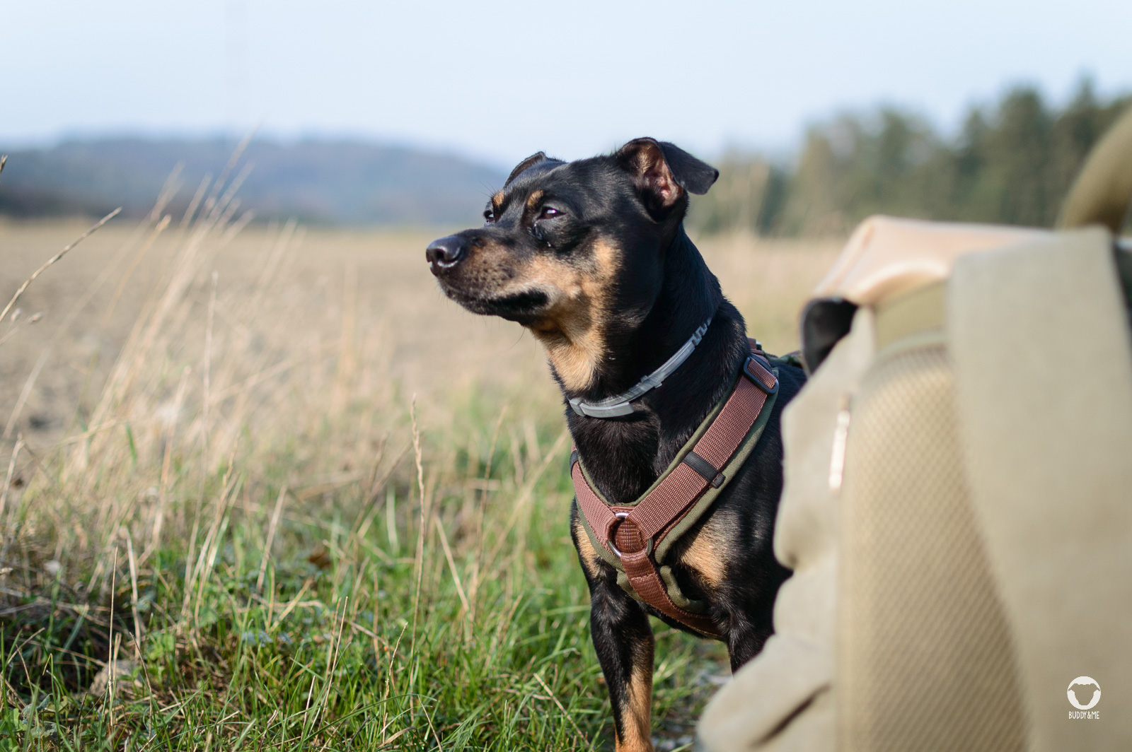 Gassitour Elfringhauser Schweiz - Pinscher Buddy steht neben Frauchens Kamerarucksack und schaut in die Ferne, das Hügelpanorama im Hintergrund