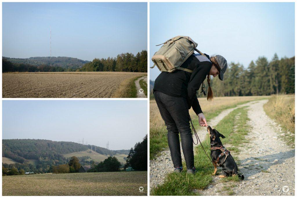 Gassirunde Elfringhauser Schweiz - zwei Fotos zeigen den weiten Ausblick vom Hölterberg, samt Wiesen, Felder und Hügeln. Das dritte Foto zeigt Pinscher Buddy und sein Frauchen auf dem Feldweg bei der Snackübergabe
