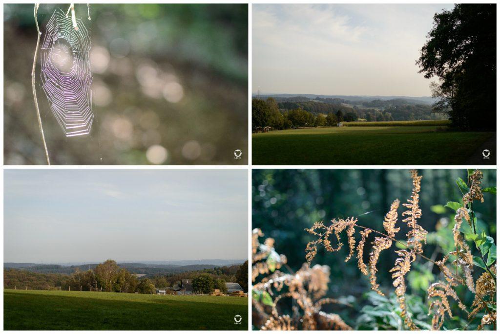 Gassi in der Elfringhauser Schweiz - zwei Fotos zeigen die Ausicht über Wiesen und Hügel rund um den Hölterberg, eins zeigt herbstlich gefärbte Farnblätter, ein weiteres ein spätsommerliches Spinnennetz