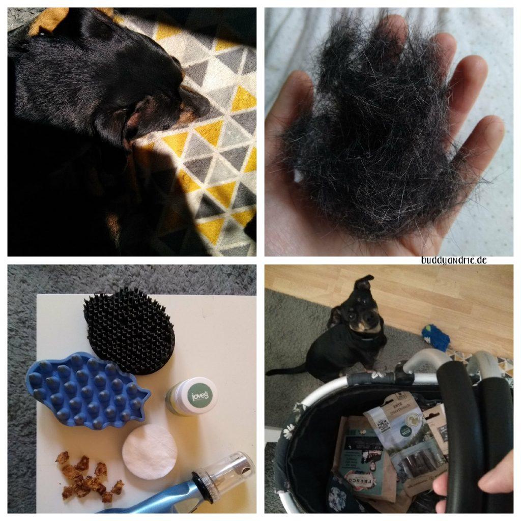 Monatsschnappschüsse Juni 2021, mit Fotos von Hundepflege Utensilien, Einer Hand voll ausgebürstetem Fell, Buddy schlafend in der Sonne und einem Korb voller Hundesnacks