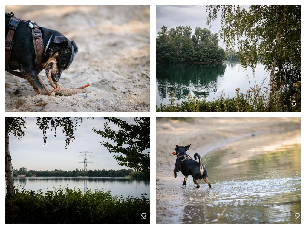 Abkühlung für Buddy - Pinscher Buddy, Buddy and Me, Hundeblog, Dogblog, Ruhrgebiet, Leben mit Hund, Hundealltag