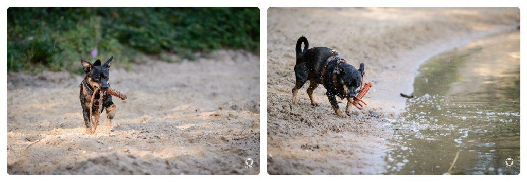 Buddy am See - Pinscher Buddy, Buddy and Me, Hundeblog, Dogblog, Ruhrgebiet, Leben mit Hund, Hundealltag
