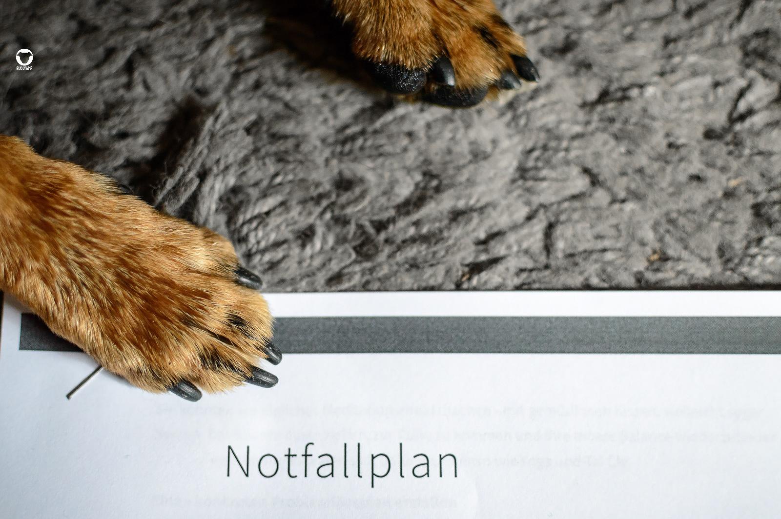 Notfallplan rund um Hund - Buddy's Pfote liegt auf einem ausgedruckten Notfallplan