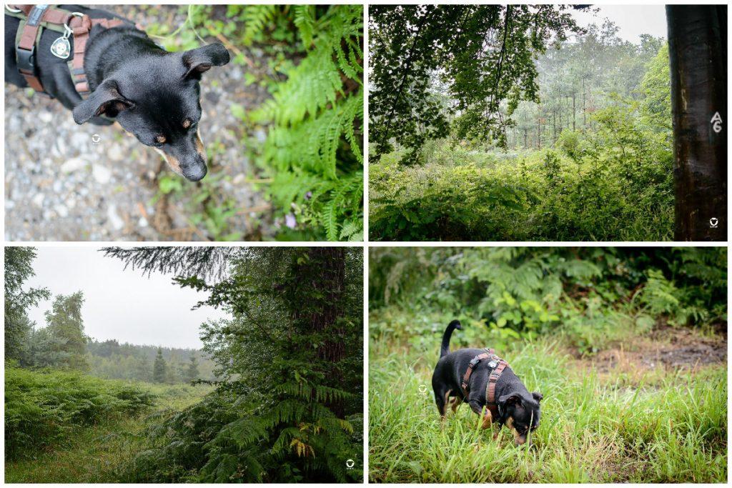 Sommer 2021 - Wald und Wiesen am Morgen nach einer regnerischen Nacht samt Buddy mittendrin