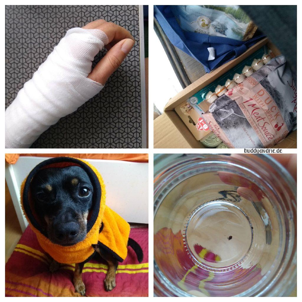 Monatsschnappschüsse Juli - Meine Hand mit Verband, unsere angesammelten Futterspenden im Kofferraum, Buddy in seinem Hundebademantel und eine entfernte Zecke im Glas